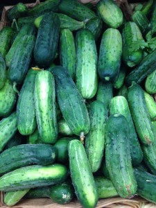 man-orchards-cucumbers