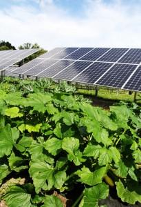 solar-mann-orchards