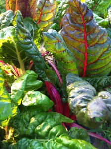 swiss-chard-mann-orchards