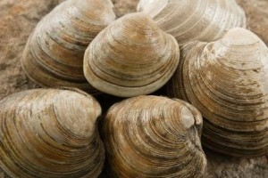 new-england-clambake-recipe